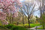 Central Park Spring Landscape, New York City