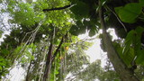 A great low angle shot of a rainforest or tropical jungle.
