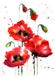Watercolor hand-drawn poppy flowers