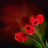 Bouquet of red tulips on a dark background with bokeh
