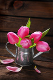 pink tulips in old metal watering can
