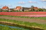 Irrigation Canal between the Fields of Tulips in Netherlands