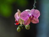 Orchid in the rainforest