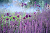 Chive herb flowers on beautiful blur background.
