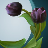 Pair of the Black tulips in beautiful green frame.