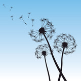 vector illustration dandelion blue sky