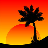 Palm tree at sunset.