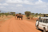 Safari at Tsavo West National Park