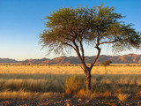 Namibia namib mountains and tree