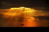 Heavenly rays on african landscape
