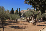 Garden of Gethsemane in Israel