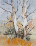 Original watercolour, trees in a forrest during winter