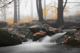 Autumn stream in the forest in misty day