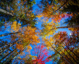 View of colorful trees during Autumn season at Killarney Provincial Park Canada