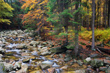 Stream in Autumn Mountain Forest