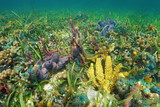 Colorful seabed with sea sponges on a coral reef