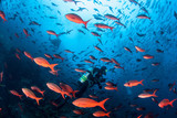 Vibrant Fish and Scuba Divers in Pacific