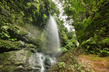 Los Tilos waterfall and Laurisilva forest in La Palma, Canary Islands, Spain.