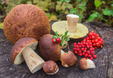 forest berries and mushrooms on a stump